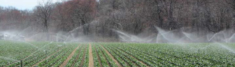 Water spraying on crops